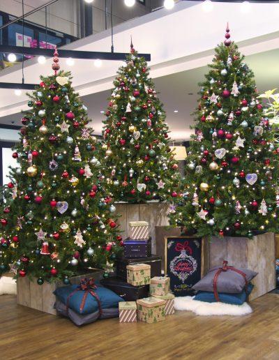 Kerstbomen groep huren