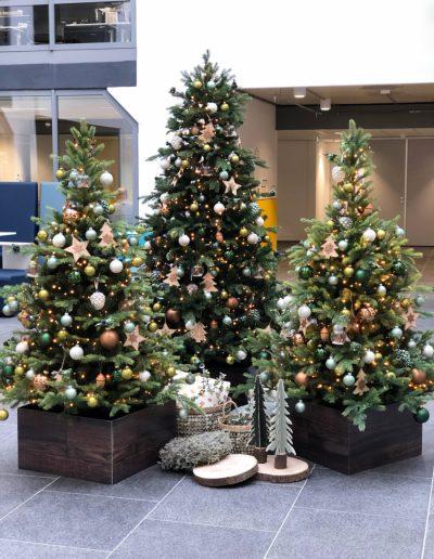 Groep gedecoreerde kerstbomen